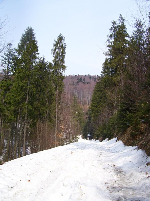 Śnieg na Karkoszczonce
