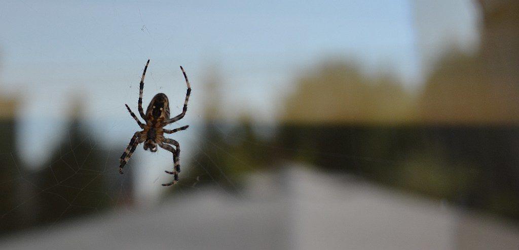 Prasówka w sieci - z tej okazji pająk ;)