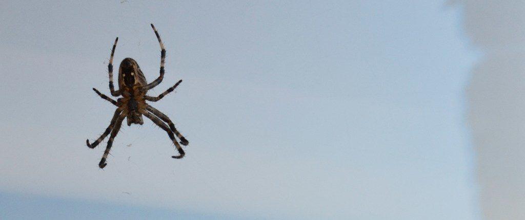 rodzaje testów w pajęczej sieci